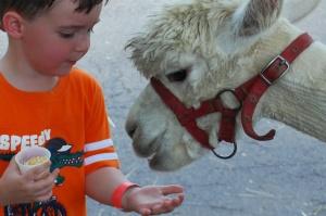 Noah and his alpaca friend